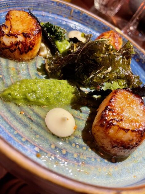 shed scallops